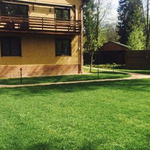 Уложенный рулонный газон на дачном участке