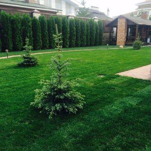 Уложенный рулонный газон на участке