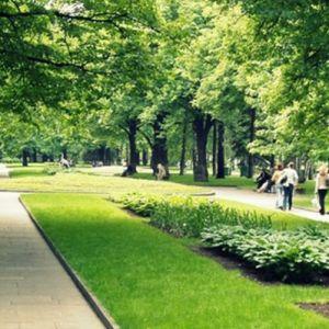Рулонный газон, уложенный в парке