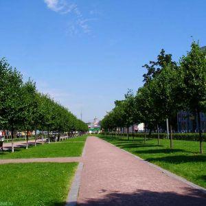 Благоустройство и озеленение городскоцй территории