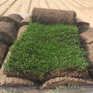 Рулоны газона, подготовленные для отправки на объект