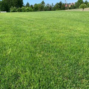 Уложенный качественный рулонный газон