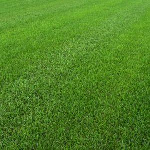 Рулонный газон «Городской»