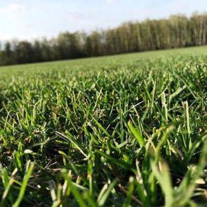 Рулонный газон «Универсальный»